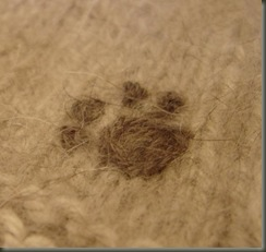 pawprint closeup 2